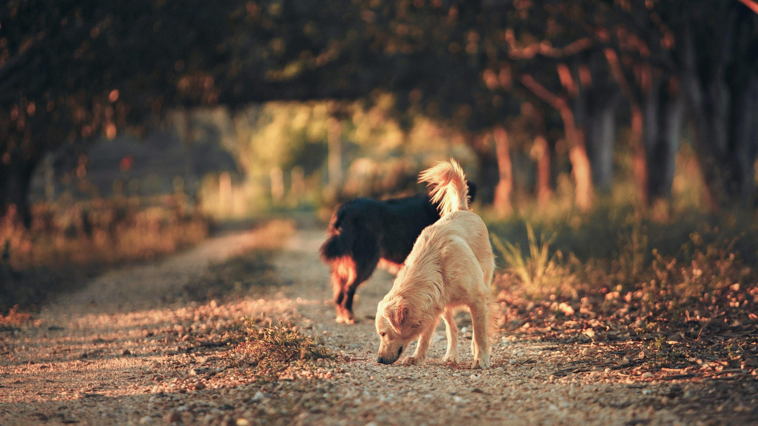 see a stray dog